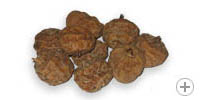Large tigernuts